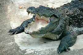 Drawn river monster Wikipedia crocodile Mugger Monsters River