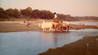 Drawn river sunset 20 DEC Irrawaddy river bull