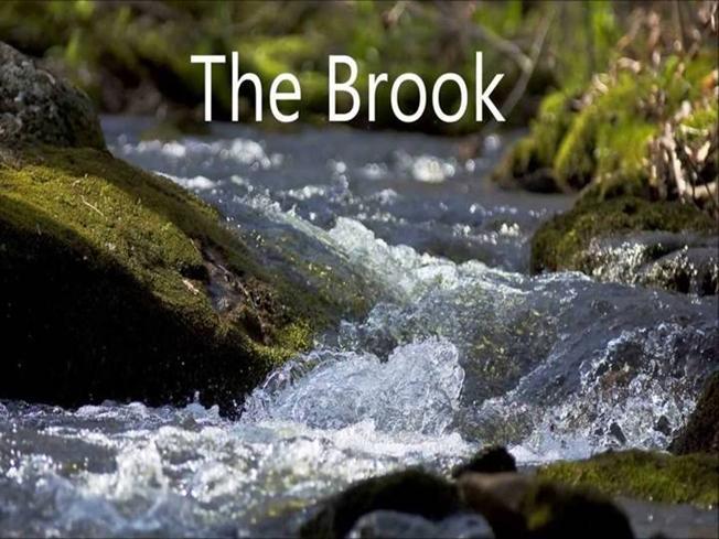 Drawn river the brook Brook BROOK THE authorSTREAM