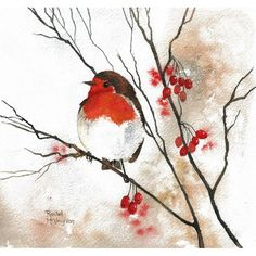 Drawn robin christmas card Of Berries Painting the the