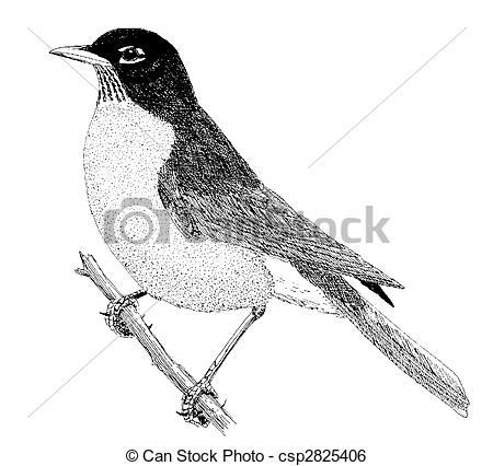 Drawn robin clipart #24 #37 Fans art Clipart