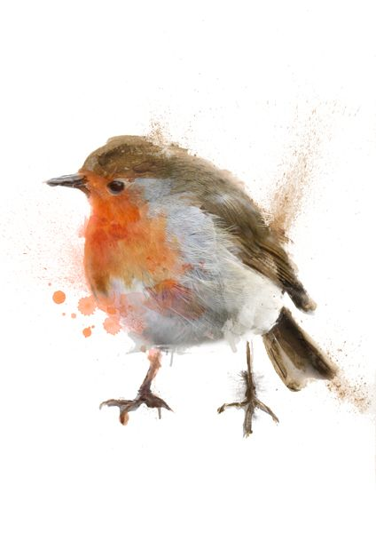 Drawn robin colour Pet Created based Robin by