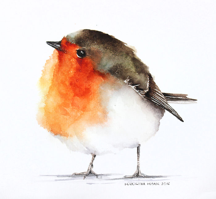 Drawn robin cute Bird Pinteres… Watercolor Birds …