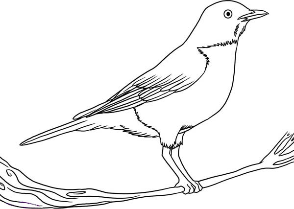 Drawn robin easy Bird How Coloring Draw to