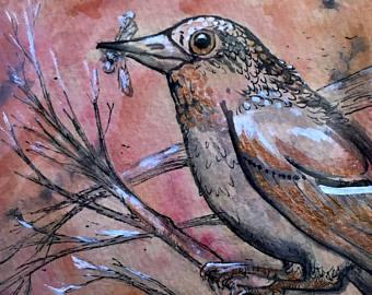 Drawn robin falcon Ink paper paper