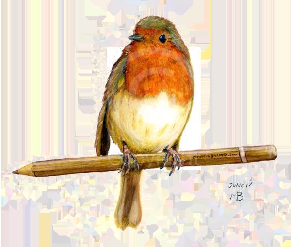 Drawn robin garden Red breasted red bird breast
