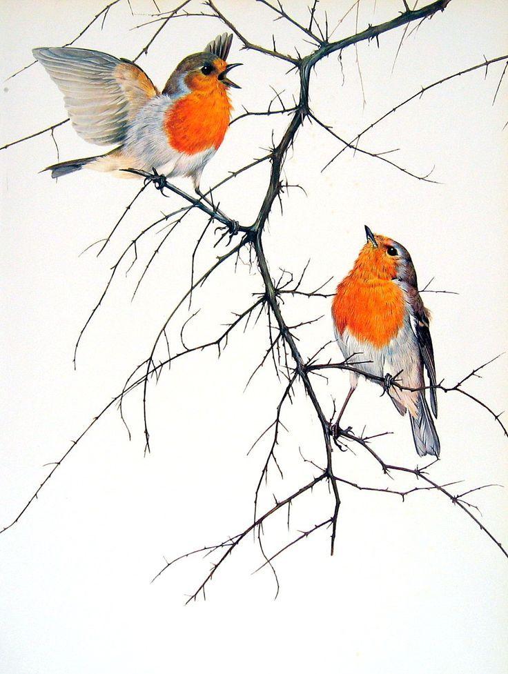 Drawn robin garden Bird on 25+ Print 1976