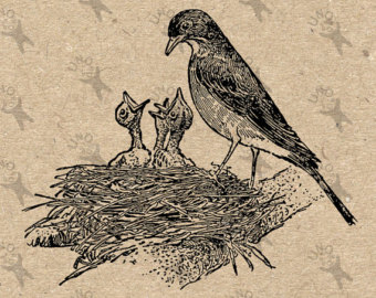 Drawn robin nest Nest printable drawing Vintage Etsy
