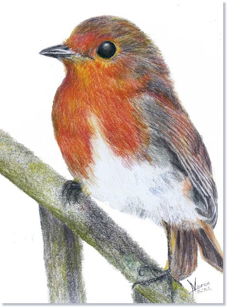 Drawn robin pencil Pinterest Pencil Robin Drawings More