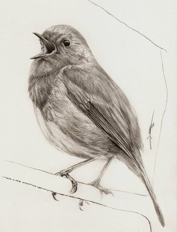 Drawn robin pencil Contentment Best Hope Pinterest Robin