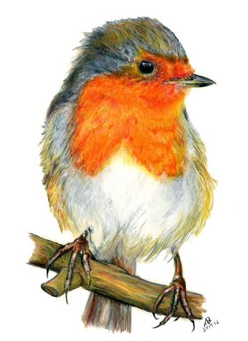 Drawn robin pencil Ideas Breast Robin Pinterest Watercolour