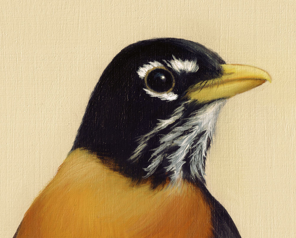 Drawn robin realistic Studio Detail  Art Painting