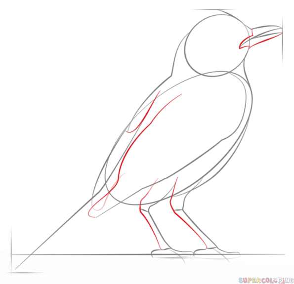 Drawn robin realistic Bird to by How Step