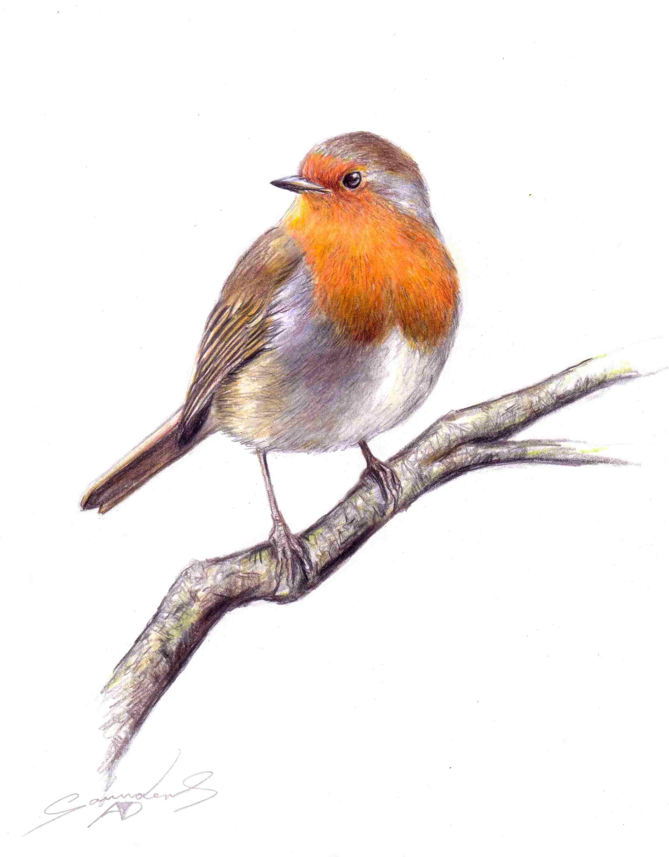 Drawn robin robin bird YouTube Time bird bird Drawing