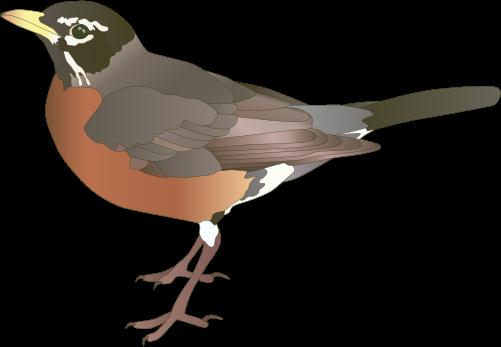 Drawn robin robin bird Symbol Turdus (American Vector migratorius