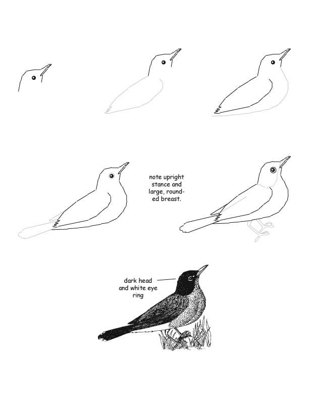 Drawn robin robin bird Drawing Lesson Robin Drawing Lesson