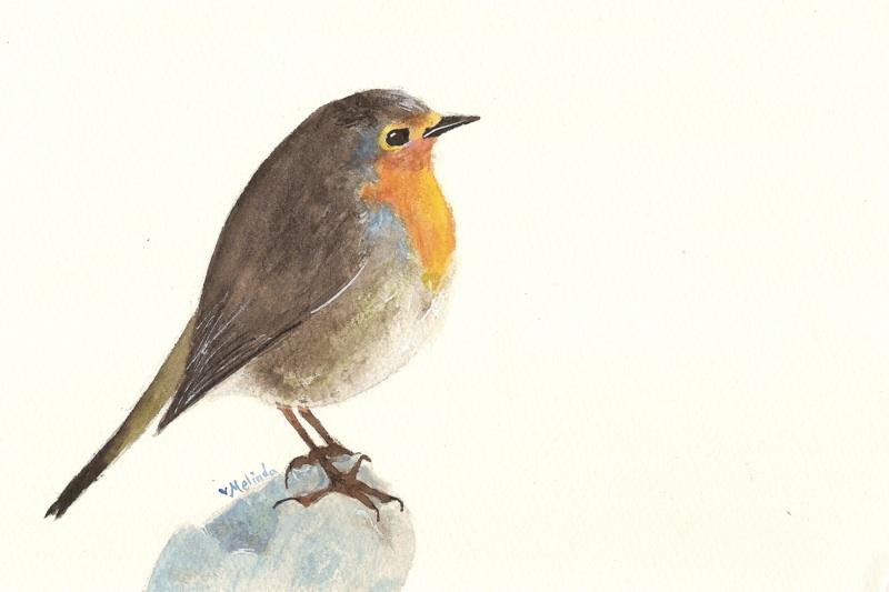 Drawn robin robin bird By heartMelinda DeviantArt Bird Robin