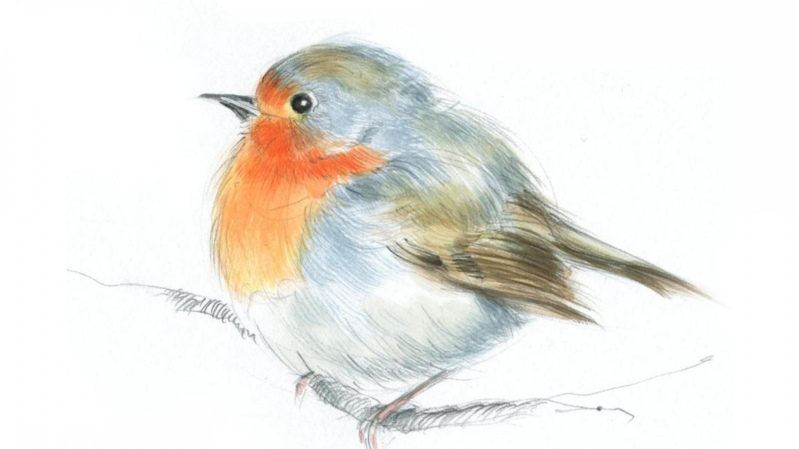 Drawn robin robin bird High Definition Robin :