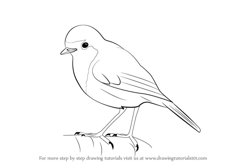 Drawn robin robin bird Step : Tutorials Learn by