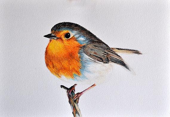 Drawn robin robin bird 5x8 inch Robin Drawing Pencil