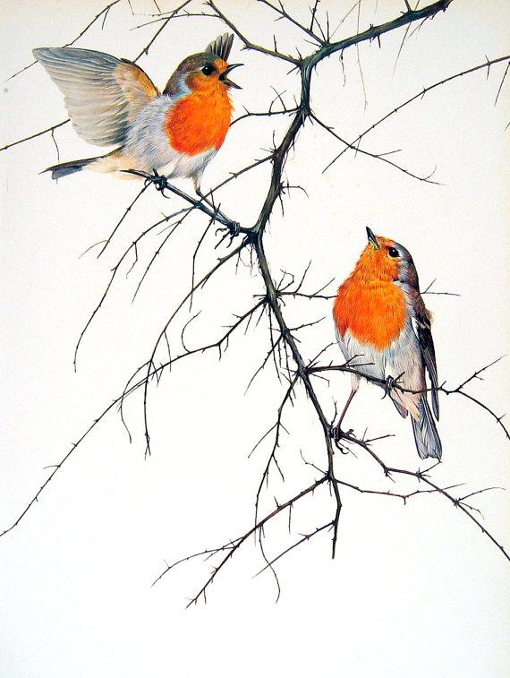 Drawn robin robin bird Bird Print Vintage Garden Bird