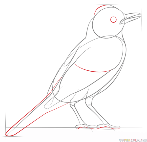 Drawn robin simple Drawing a 5 to draw
