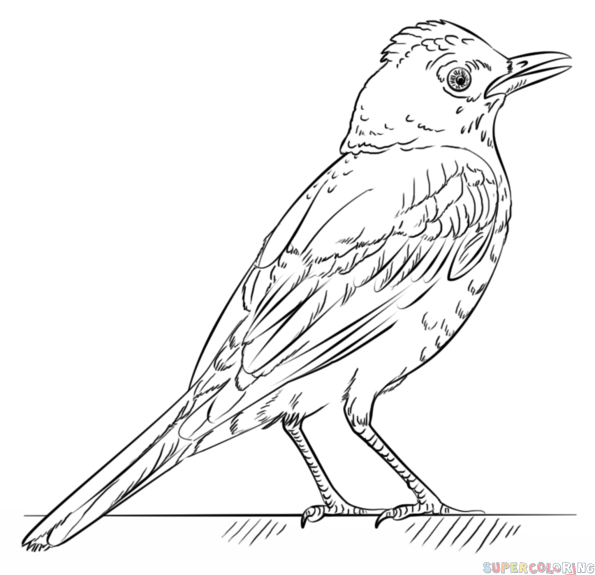 Drawn robin simple Step bird Drawing to a