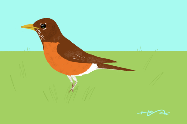 Drawn robin simple Draw Spring How to Flowers