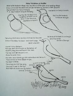 Drawn robin sketch Extra  Worksheets back drawing