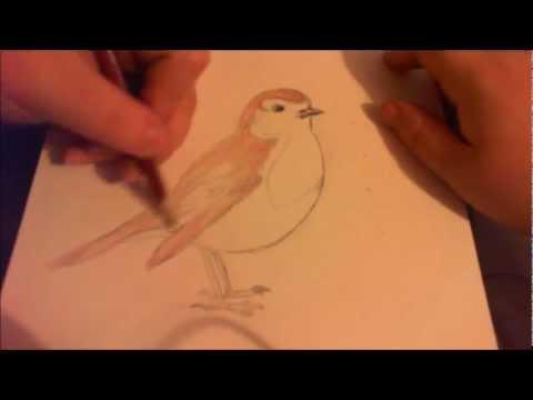 Drawn robin sketch YouTube a Robin How Robin