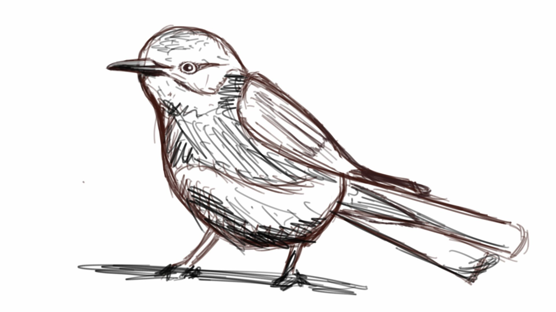 Drawn robin sparrow 3 minutes How in YouTube