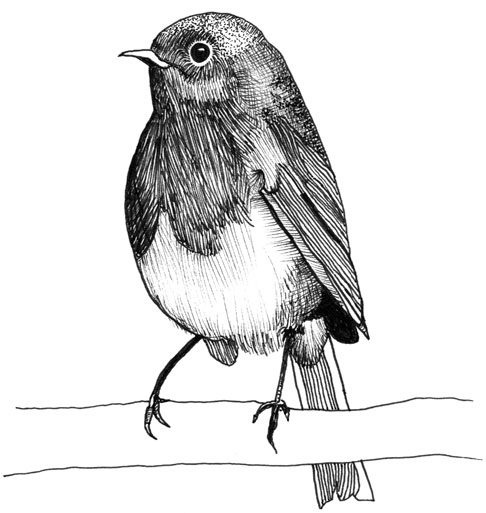 Drawn robin sparrow Art'spiration Pinterest Robins of of