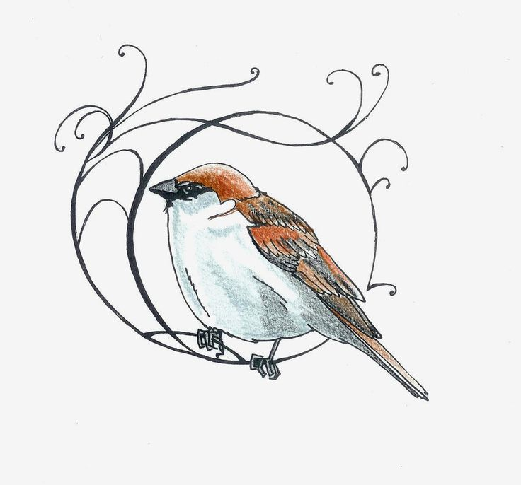 Drawn robin sparrow Sparrow Little drawing on by