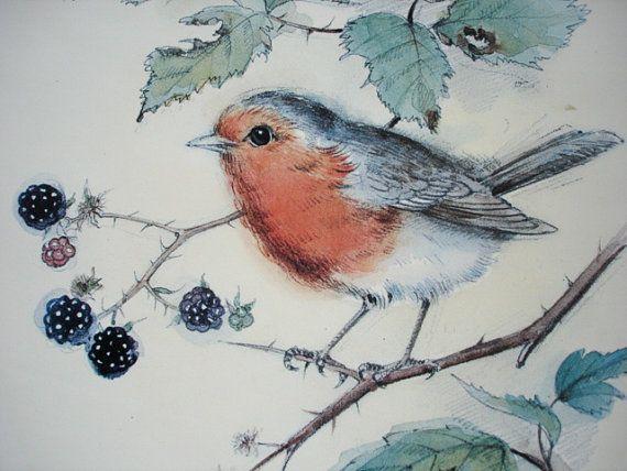 Drawn robin vintage Sketch images Print on Vintage