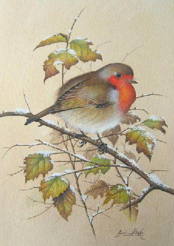 Drawn robin winter bird 78 through the on seasons