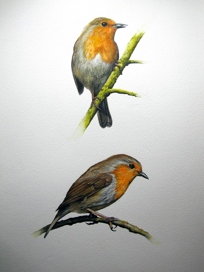 Drawn robin winter bird Hand painting seasons 78 on