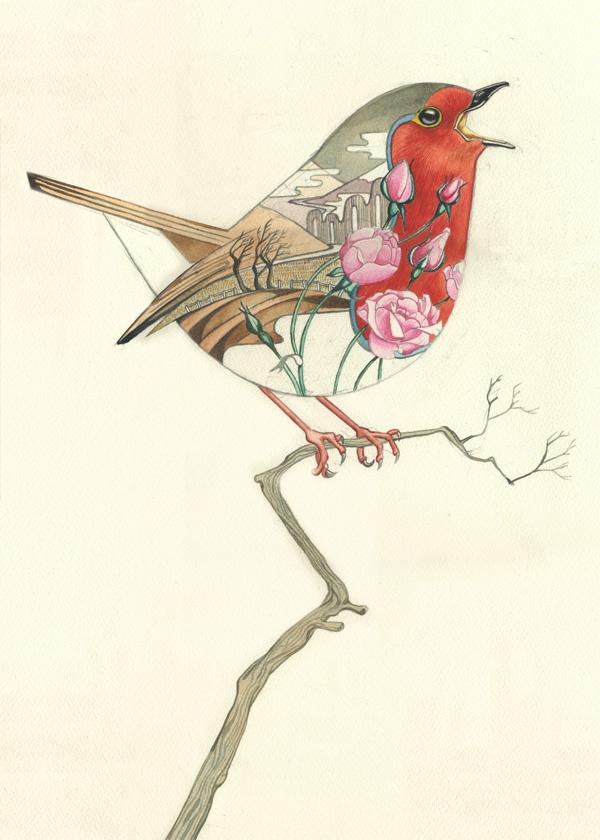 Drawn robin winter bird Robin Mackie Artist DM behind