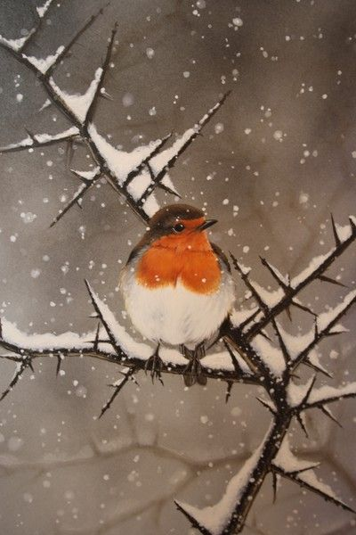 Drawn robin winter bird Best Let It on Snow