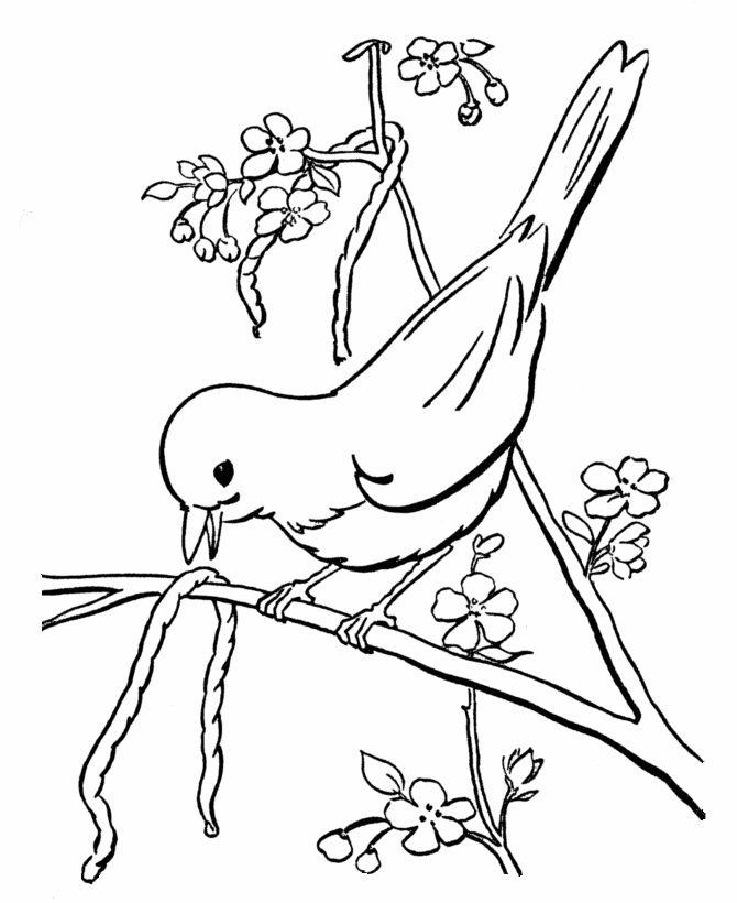 Drawn robin worm Bird A coloring worm Pinterest