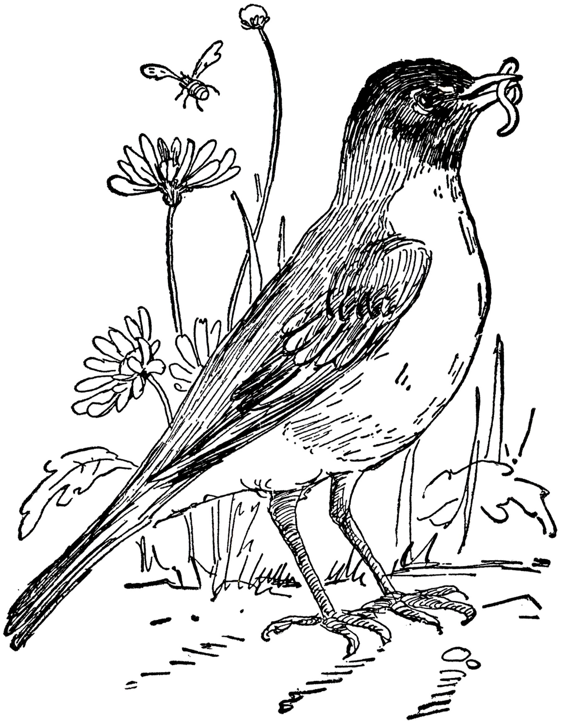 Drawn robin worm Bird Robin White Robin Black