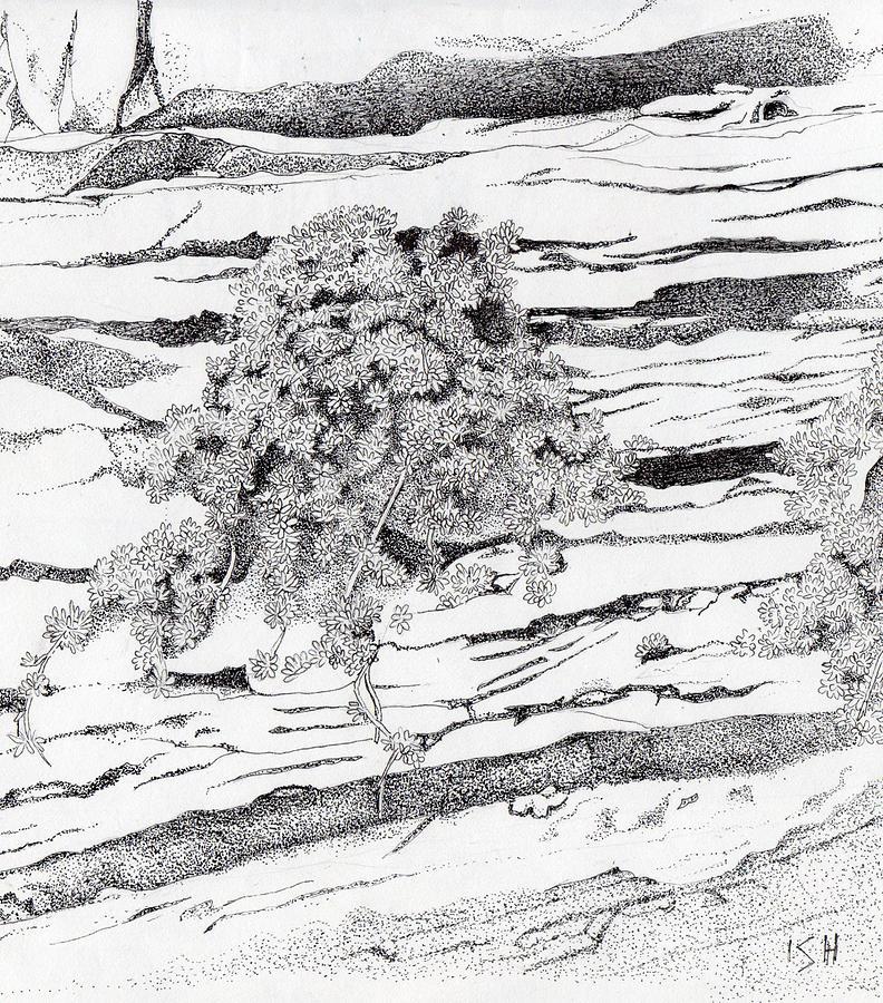 Drawn rock sedimentary rock Canyon Shrub Kolob Hutton by