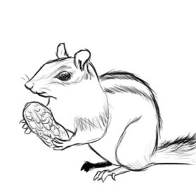 Drawn rodent Chipmunk Images Drawing Rodent Art