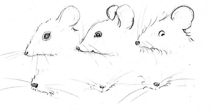 Drawn rodent Draw Features Craftsy With How