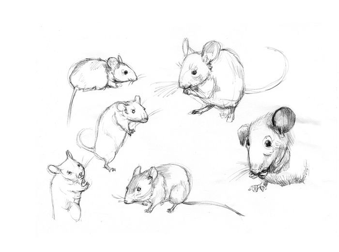 Drawn rat i love you And Animals mice this best