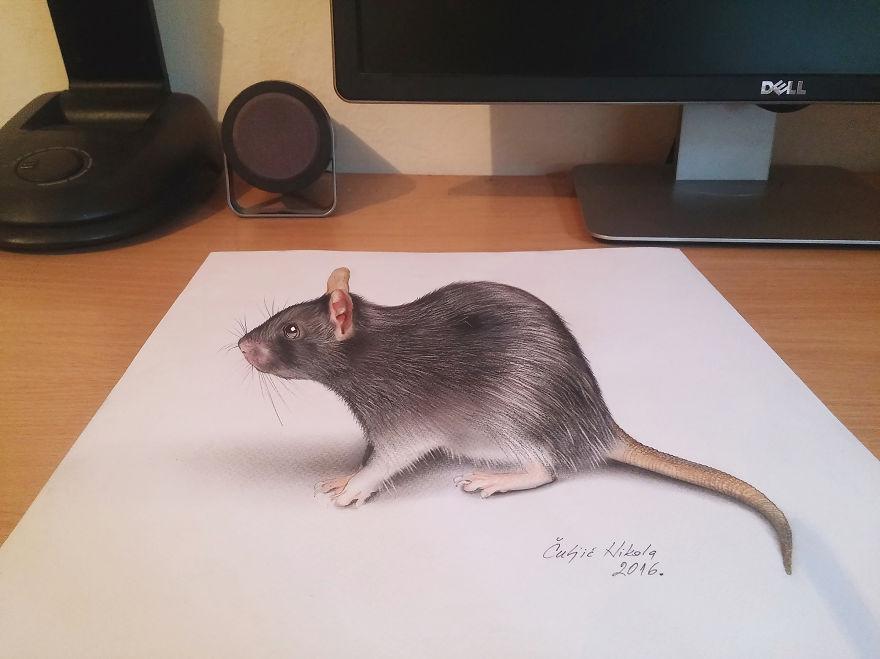 Drawn rodent 3d hd Rat Drawings 3D 3D Unbelievable