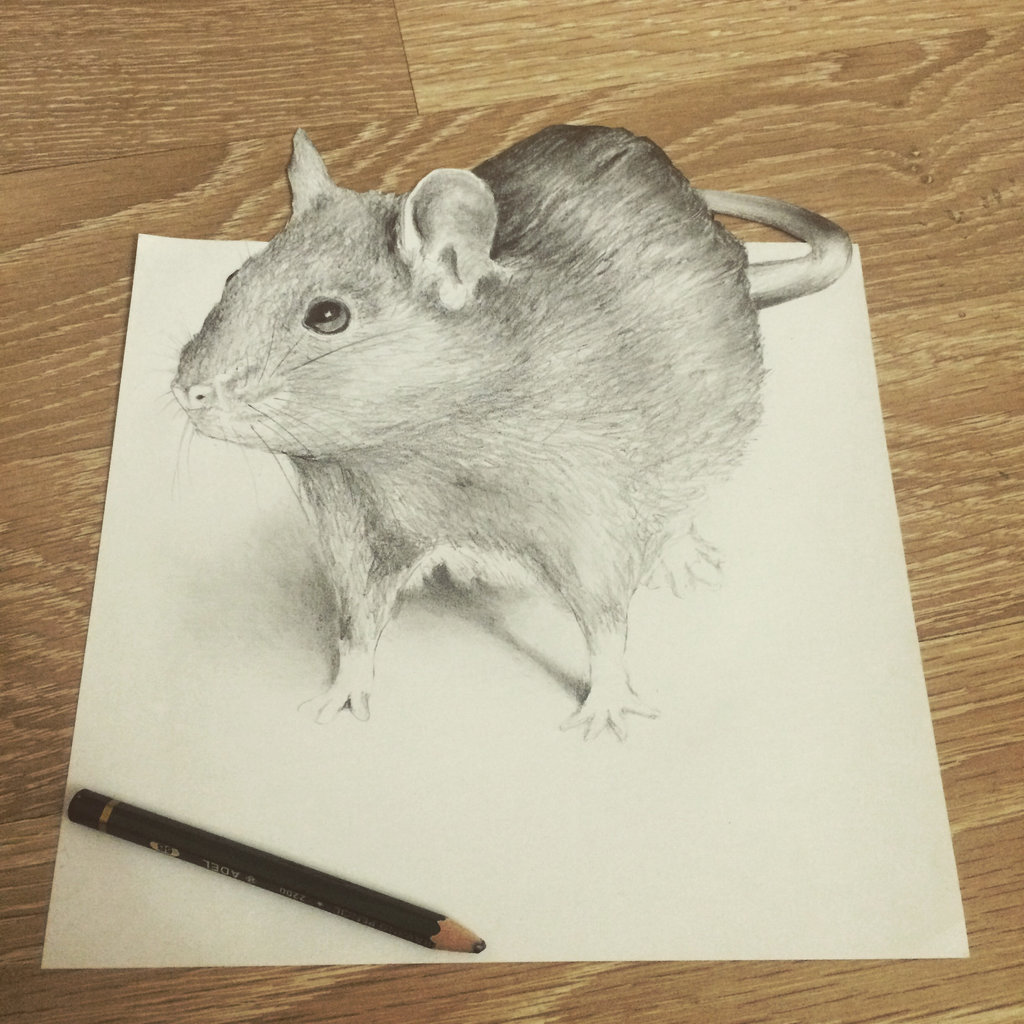 Drawn rodent 3d hd DeviantArt Rat by by drawing)