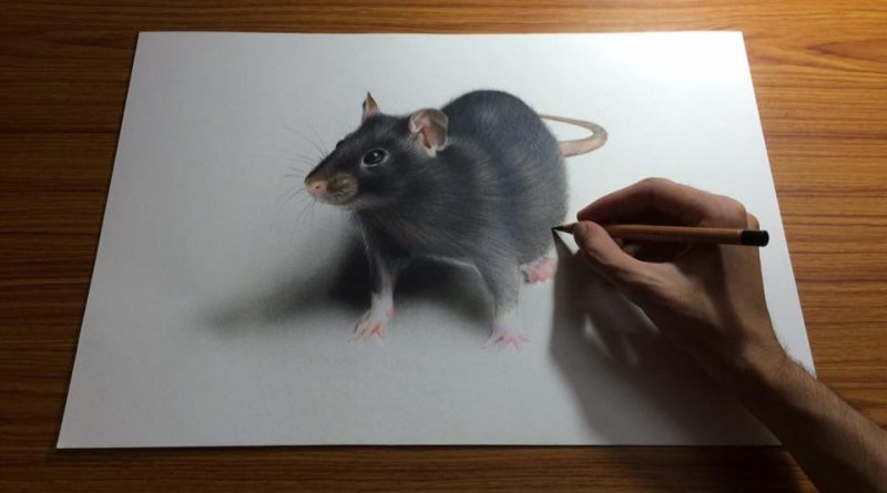 Drawn rodent 3d hd You Drawings Expert Amaze Will