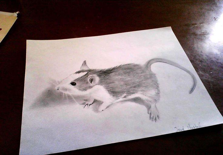 Drawn rodent 3d hd And 3d A 3d Pinterest