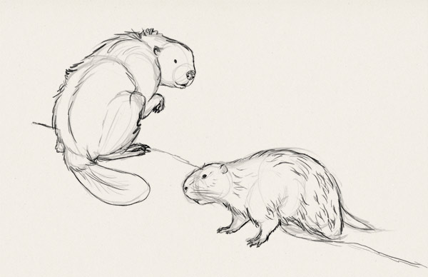 Drawn rodent Draw Their Rodents how How