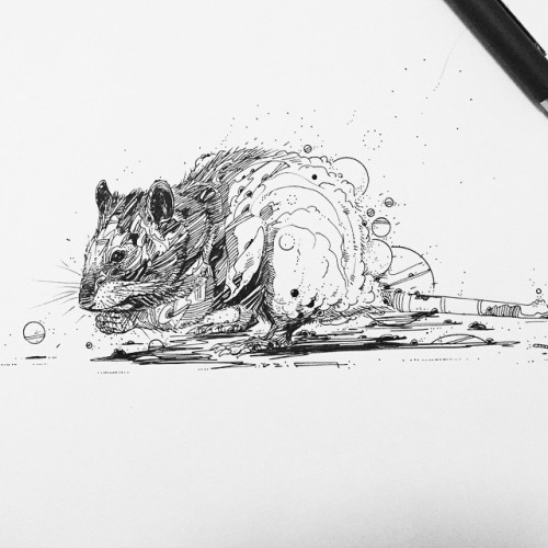 Drawn rodent artwork Rat Another #abstract #illustration #illustration